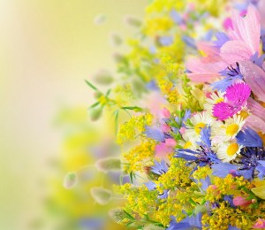 Beautiful-Summer-Flowers-Wallpaper