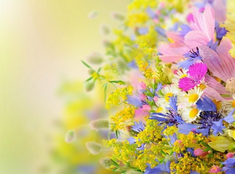 Beautiful-Summer-Flowers-Wallpaper