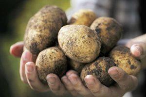 potato-starch-packaging