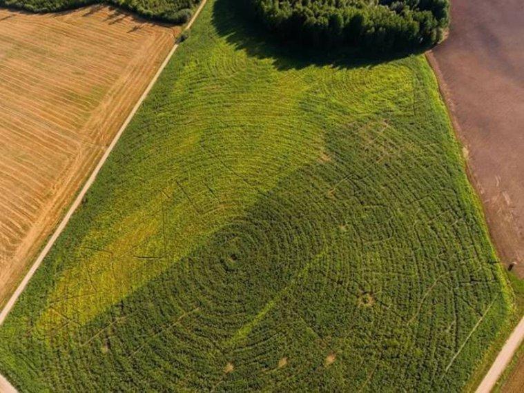 kandagas-pagasta-grigalu-majas-lauka-podnieku-gimene-izveidojusi-verienigu-9-hektaru-lielu-kukuruzas-lauka-labirintu-kur_449951638